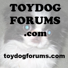 Toy Dog Forums